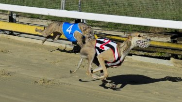 Chief Minister Andrew Barr has confirmed an end to greyhound racing in the ACT after the NSW ban.