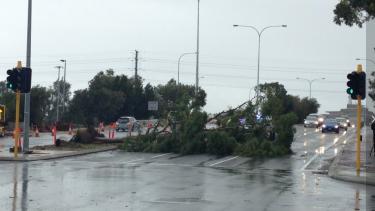 A fallen tree blocks East Parade in Perth.