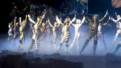 Musical cats escaped shutdowns to get on a real stage