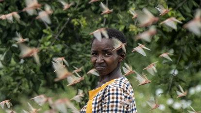 Biblical 'super-swarms' of locusts devour African crops