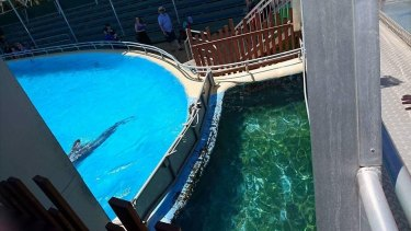 A dolphin pool at Dolphin Marine Magic.