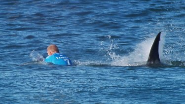When sharks start eating our hero surfers like Mick Fanning, everyone gets up in arms.