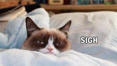 Cat says ....