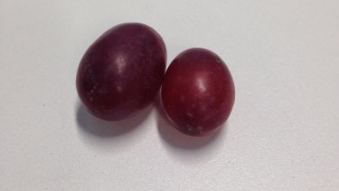 A red seedless grape, sold for $6.90 a kilo, retails for 2.8c. A 5c coin will get you one large, and one small, red seedless grape.
