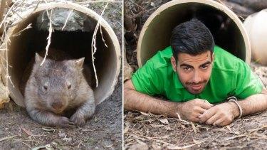 Peel Zoo's Matt as a wombat.