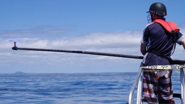 UQ School of Veterinary Science PhD student Fletcher Mingramm ready to catch whale blow.