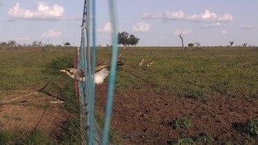 A camera trap set up on a boundary fence.