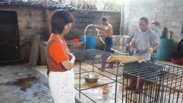 Andrea Gung, executive director of the Duo Duo Animal Welfare Project, visits a slaughterhouse in Yulin.