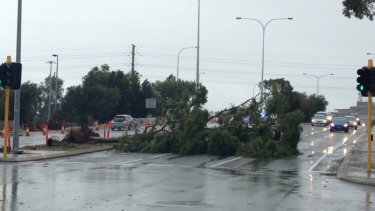 A fallen tree blocked East Parade in Perth on Saturday.