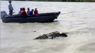 A dead crocodile was found floating in an abandoned gillnet at Roe River.