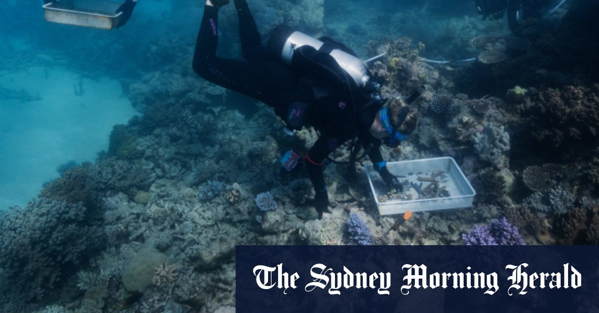 Coral carpentry on the Great Barrier Reef – WAtoday