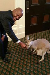 Representative Mike Gipson, with a kangaroo and joey brought to the California state house.