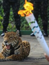 The jaguar and the torch