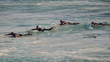 Rick Knoppert's amazing photograph last month of surfers heading to the shore at Mettams Pool after a shark was swimming among them.