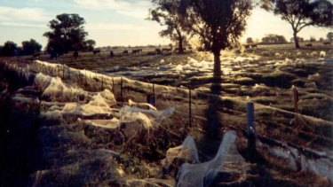 Paddocks in Albury show the extent of the 'spider rain'.
