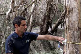 Luke Jeffrey takes methane samples from wetland paperbark trees.