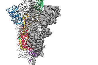 A 3D map of SARS-CoV-2's spike protein.