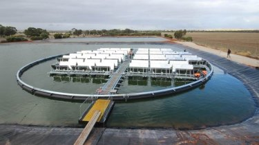 The $12 million bank of floating solar panels installed by Infratech Industries near Jamestown in northern South Australia.