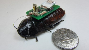 Robo-roach: An electronic backpack with wireless transmission controls the cockroach and sends information back to rescue workers.