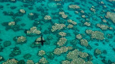 The central regions of the Great Barrier Reef have been hardest hit this year.