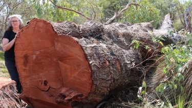 Save Beeliar Wetlands convenor Kate Kelly with the giant jarrah tree.