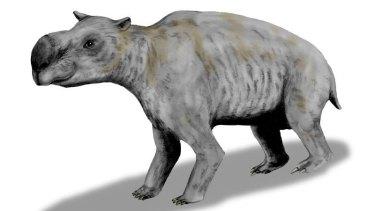 The wombat-like Diprotodon was one of Australia's megafauna.