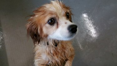 The wet floor in the dog kennels at Wagga Wagga pound in a photo from the council's website.