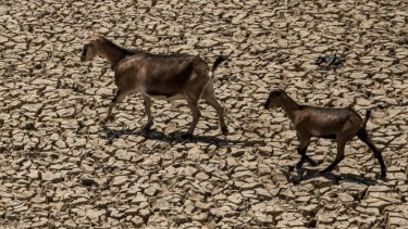 Most of Indonesia's provinces are in the midst of a serious drought with this year's El Nino playing a role.