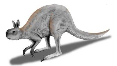 The giant kangaroo: Procoptodon.