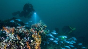Researchers explore the surface of one of the 'drowned apostles'.
