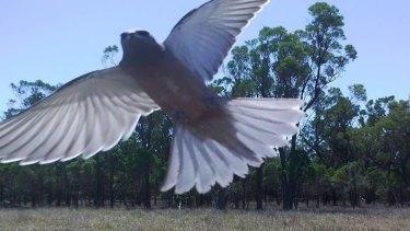 Birds love hovering near the camera, Matt Wilson says.