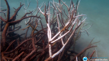 Dying corals in the Great Barrier Reef after the worst bleaching event on record.