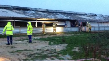 Firefighters survey the damage at Wonga Piggery after the fire.