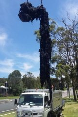 Part of the one-tonne wet wipes cluster removed from sewer pipes at the pumping station in Eleebana.