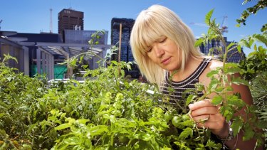 Dr Sara Wilkinson tends a tomato crop on a rooftop above Broadway at UTS.