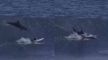 The dolphin jumps - and lands on Jed.