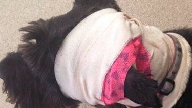 Thankfully Monty is expected to make a full recovery.