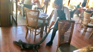 Samia Lila dragged the goanna from the restaurant.