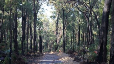 The five kilometre stretch of forests locals are fighting to save.