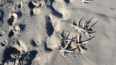Dead star fish have washed up at South Beach.
