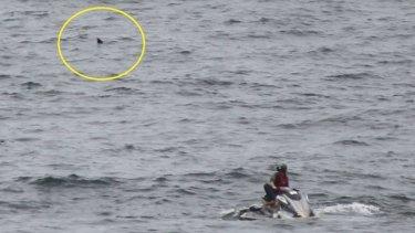 The shark lurks behind a lifesaver on a jet-ski on Saturday.