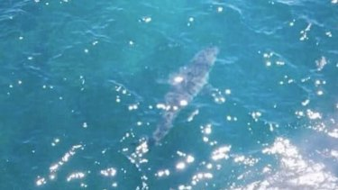 A great white shark, thought to be between six and seven metres long, was seen off Marino Rocks in South Australia.