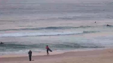 Surfers hit the water at sunrise at Bondi Beach.