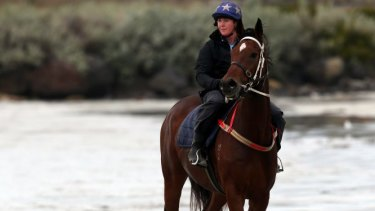 One of Darren Weir's horses training on the beach.