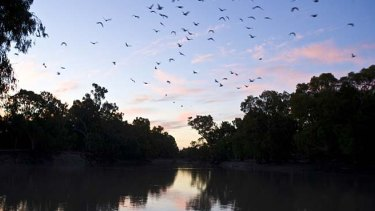 Governments don't seem to be doing much to fix the Murray-Darling Basin's problems.