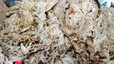 Wet wipes accumulating at a South East Water treatment plant.