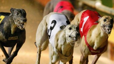 Baird does not come across as a big fan of dog racing.