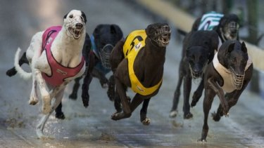 Hot dogs: Sky Racing's blackout has resulted in a surge in betting on greyhound racing.