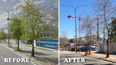 Trees outside the Civic Heart site in October and then recently. IT's not clear why they died, but residents fear the changes in groundwater have something to do with it.