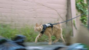 A police cat serves at comedic relief during the sequence.